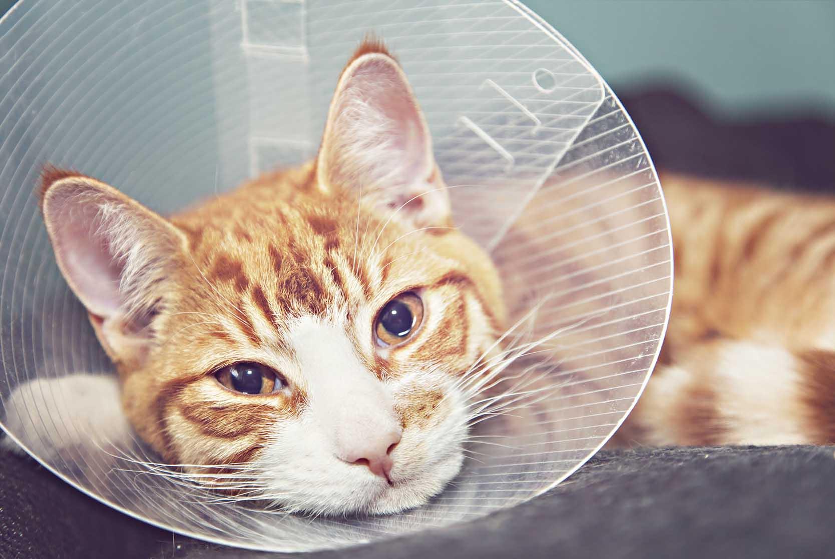 forsikring av katt